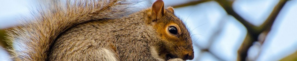 Our animals control services cover: mice, rats and other rodents, foxes, minks, deers and other
