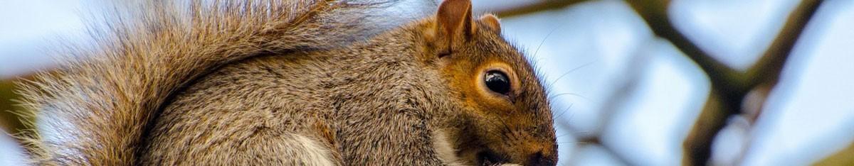 Pest control Farnham, Guildford, Alton, Godalming, Haslemere, Midhurst